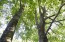 Bäume - Die Kraft der Natur.